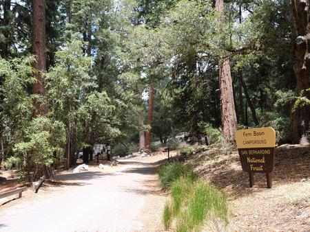 Roadway with Fern Basin Campground sign.