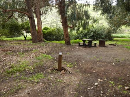 Campsite eucalyptus forested area with picnic table, food storage box, and campsite number.Lower Loop - 003