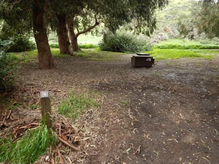 Campsite eucalyptus forested area with picnic table, food storage box, and campsite number.Lower Loop - 005