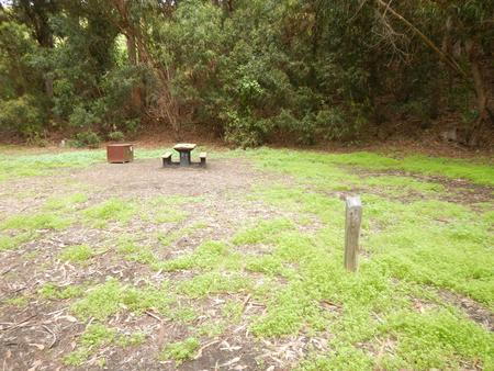 Campsite eucalyptus forested area with picnic table, food storage box, and campsite number.Lower Loop - 006