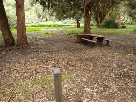 Campsite eucalyptus forested area with picnic table, food storage box, and campsite number.Lower Loop - 007
