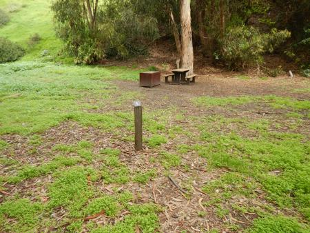 Campsite eucalyptus forested area with picnic table, food storage box, and campsite number.Lower Loop - 008