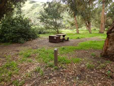 Campsite eucalyptus forested area with picnic table, food storage box, and campsite number.Lower Loop - 009