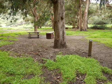 Campsite eucalyptus forested area with picnic table, food storage box, and campsite number.Lower Loop - 015