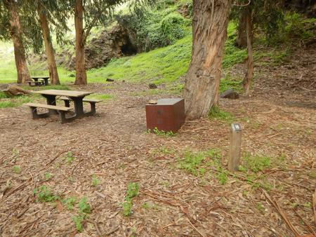 Campsite eucalyptus forested area with picnic table, food storage box, and campsite number.Lower Loop - 018