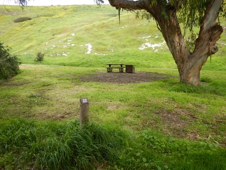 Campsite eucalyptus forested area with picnic table, food storage box, and campsite number.Lower Loop - 022