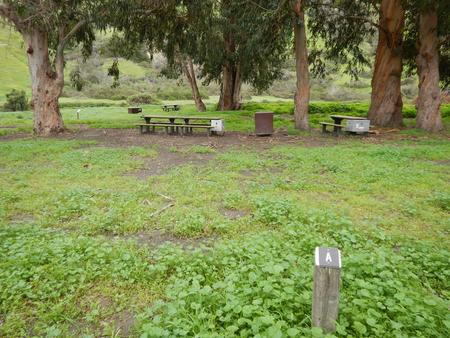 Campsite eucalyptus forested area with picnic table, food storage box, and campsite number.Upper Loop - A