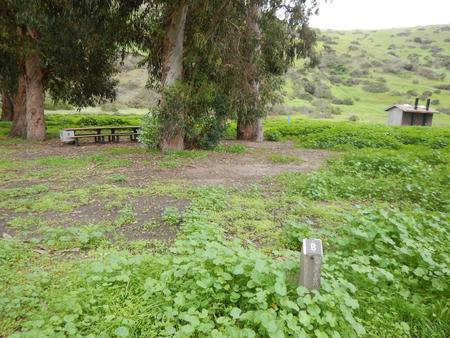 Campsite eucalyptus forested area with picnic table, food storage box, and campsite number.Upper Loop - B