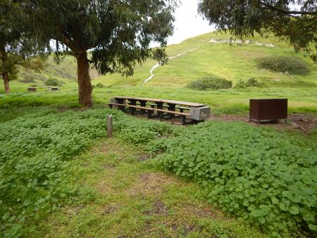 Campsite eucalyptus forested area with picnic table, food storage box, and campsite number.Upper Loop - D