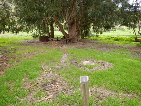 Campsite eucalyptus forested area with picnic table, food storage box, and campsite number.Upper Loop - E