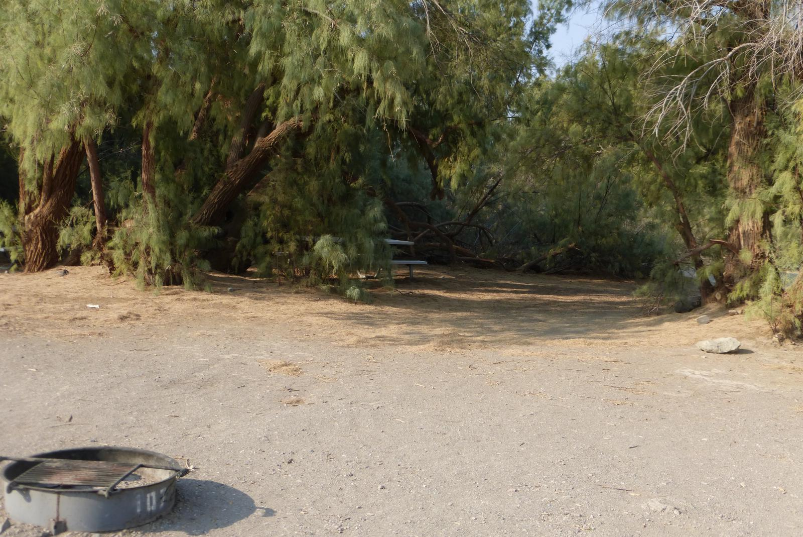Furnace Creek Campground standard nonelectric tent only drive in site #107 with picnic table and fire ring.