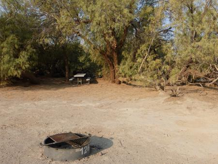 Tent only walk in site #126.  No campervans, RV's, or pop up tents.  One firepit with grate and one picnic table.  No utilities.