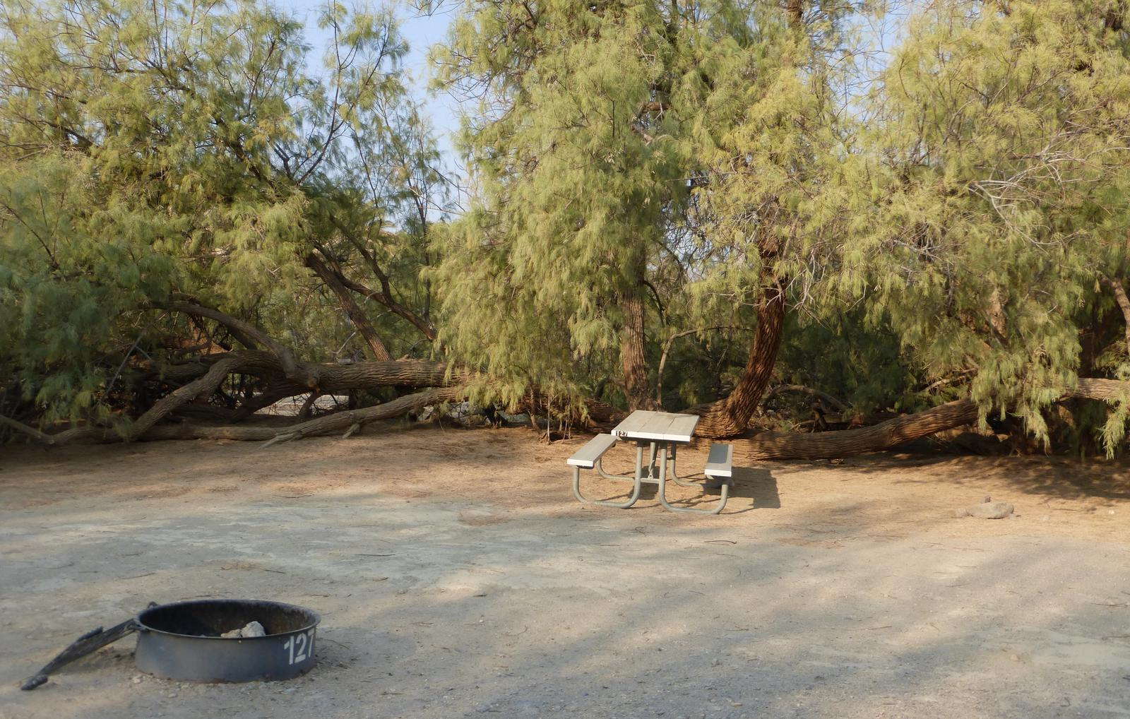 Tent only walk in site #127.  No campervans, RV's, or pop up tents.  One firepit with grate and one picnic table.  No utilities.
