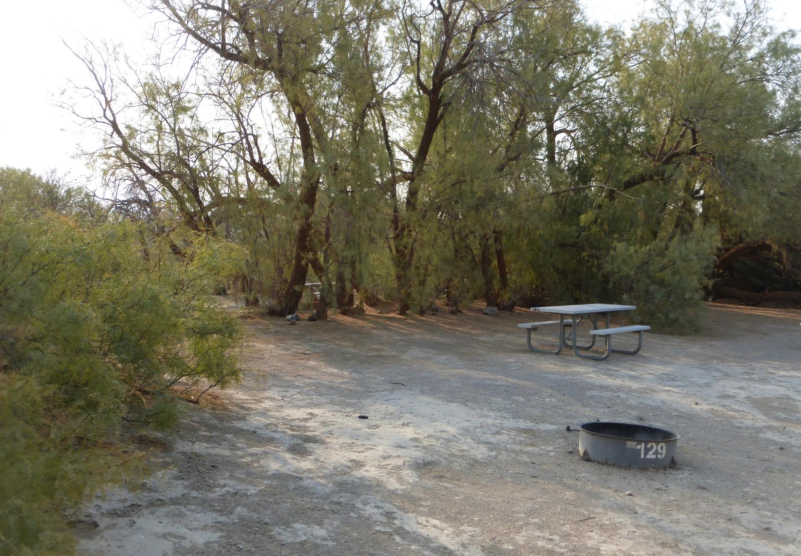 Tent only walk in site #129.  No campervans, RV's, or pop up tents.  One firepit with grate and one picnic table.  No utilities.