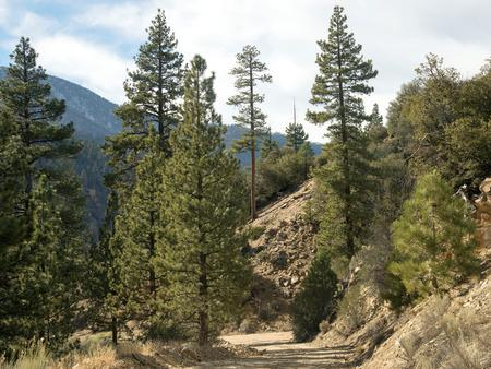 View from Coon Creek Cabin Recreational Area