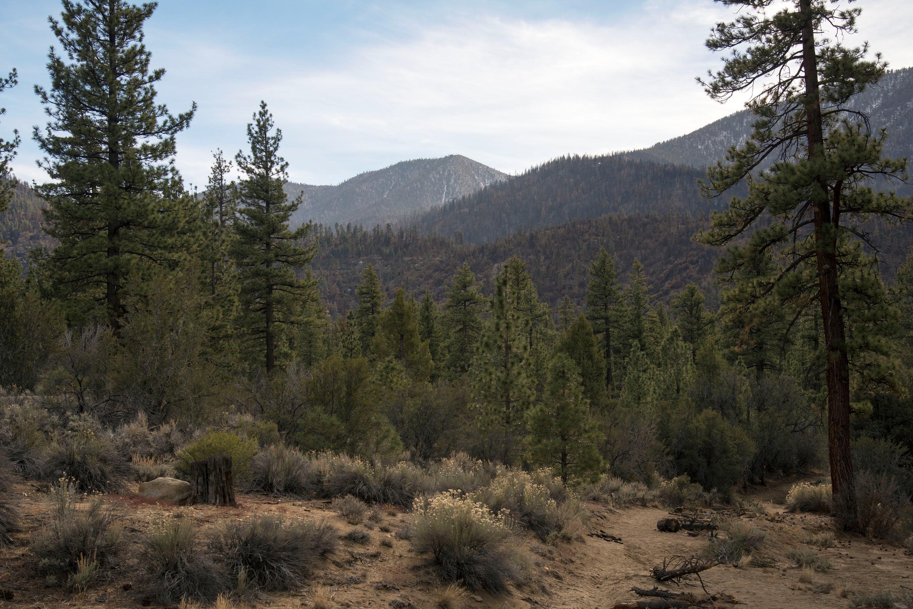 Coon Creek Cabin Recreational Area View