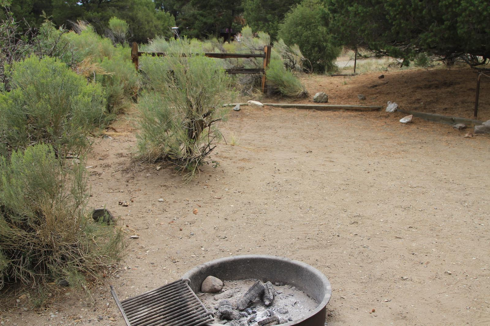Site #9, Pinon Flats Campground