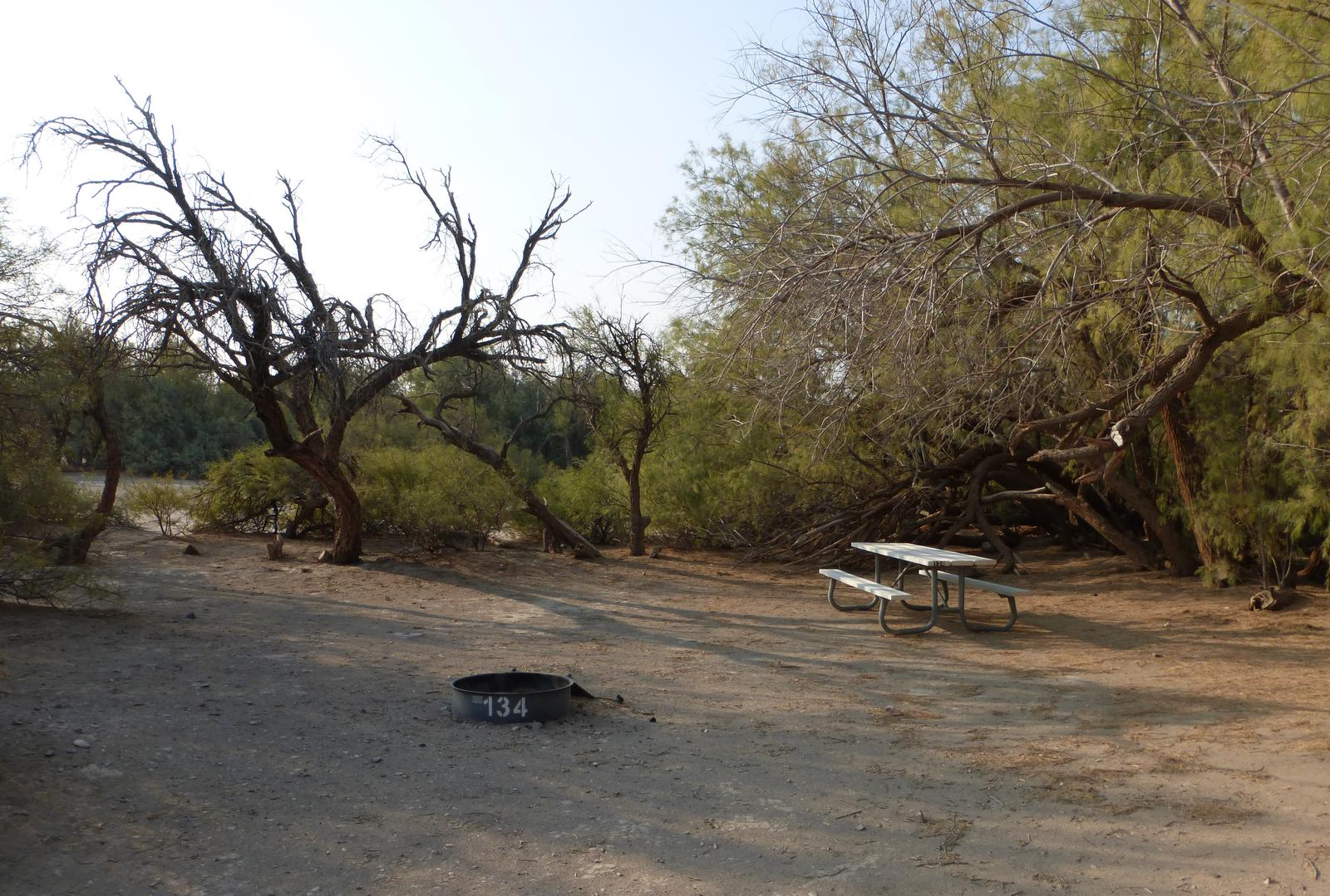 Tent only walk in site #134.  No campervans, RV's, or pop up tents.  One firepit with grate and one picnic table.  No utilities.