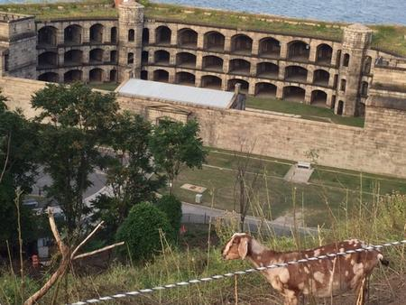 FORT WADSWORTH BATTERY WEED- THINGS TO DOCamp Staff, Ranger-led tours of fortifications and summer goat talk programs