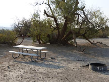 Tent only walk in site #137.  No campervans, RV's, or pop up tents.  One firepit with grate and one picnic table.  No utilities.