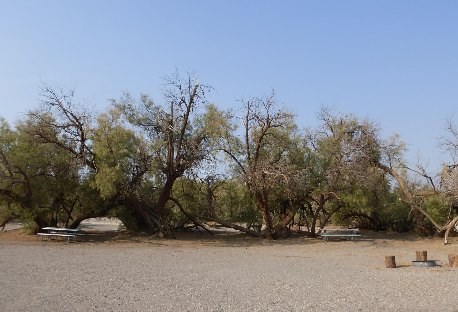 Furnace Creek Campground tent only group site #5.