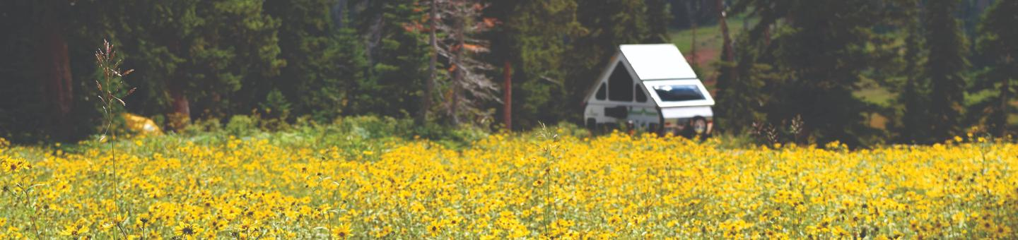 Meadow of yellow flowers and a triangle shaped camper trailer. The Point Supreme Campground offers beautiful views of wildflowers and cool temperatures.
