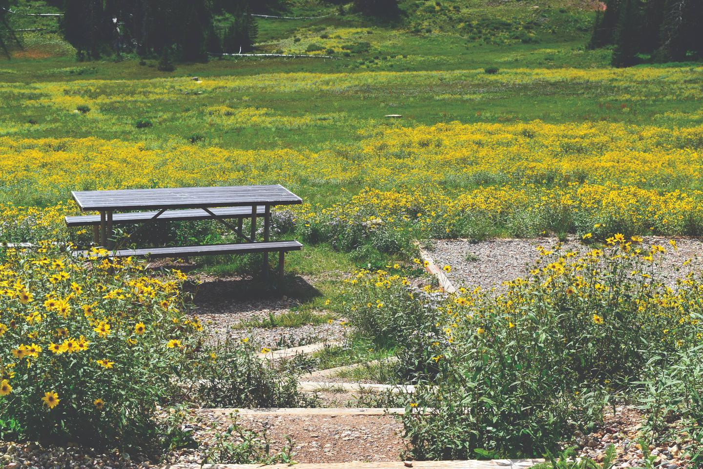 Path leading down to a picnic table, tent pad and meadow of flowers. Each campsite has a picnic table plus tent pad for camping.