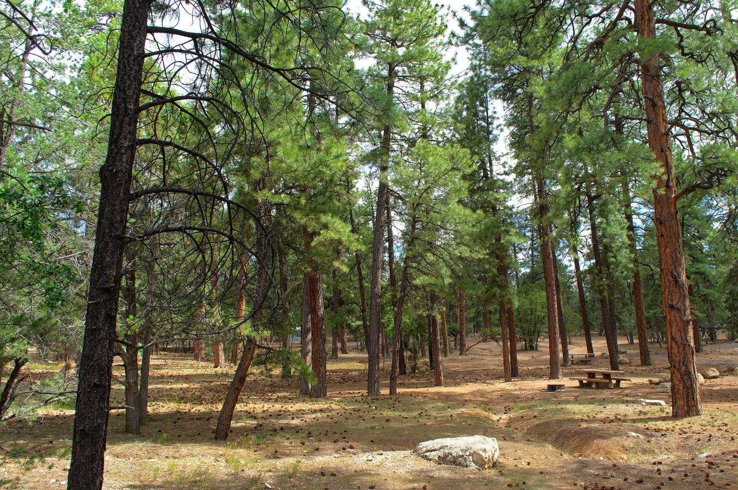 Campsites in Aspen and Fir Loops, Mather Campground
