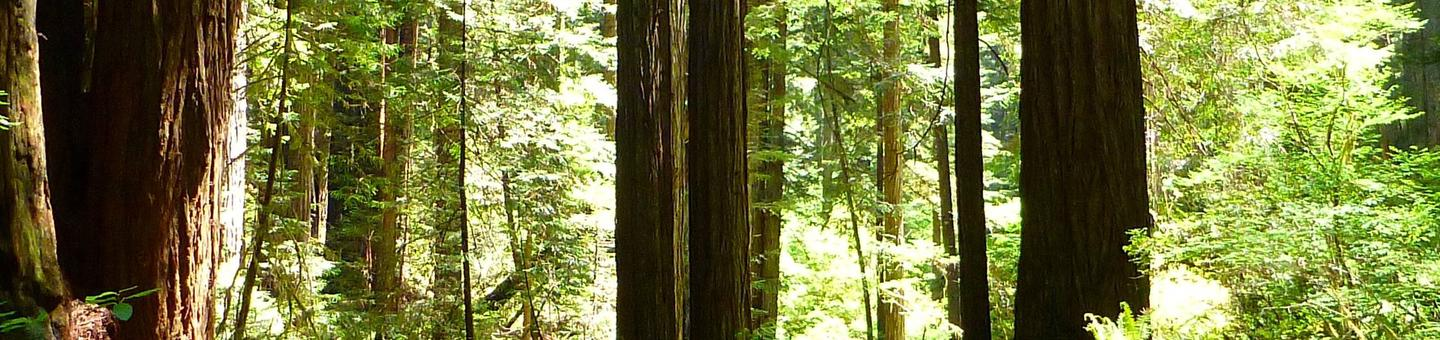 Six Rivers National Forest and Redwood National Park