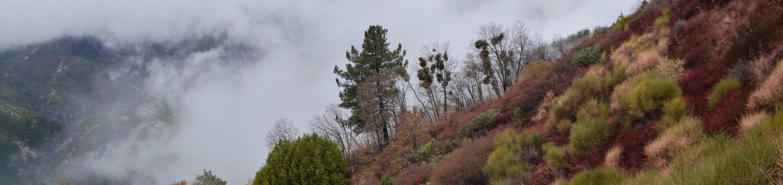 San Bernadino National Forest