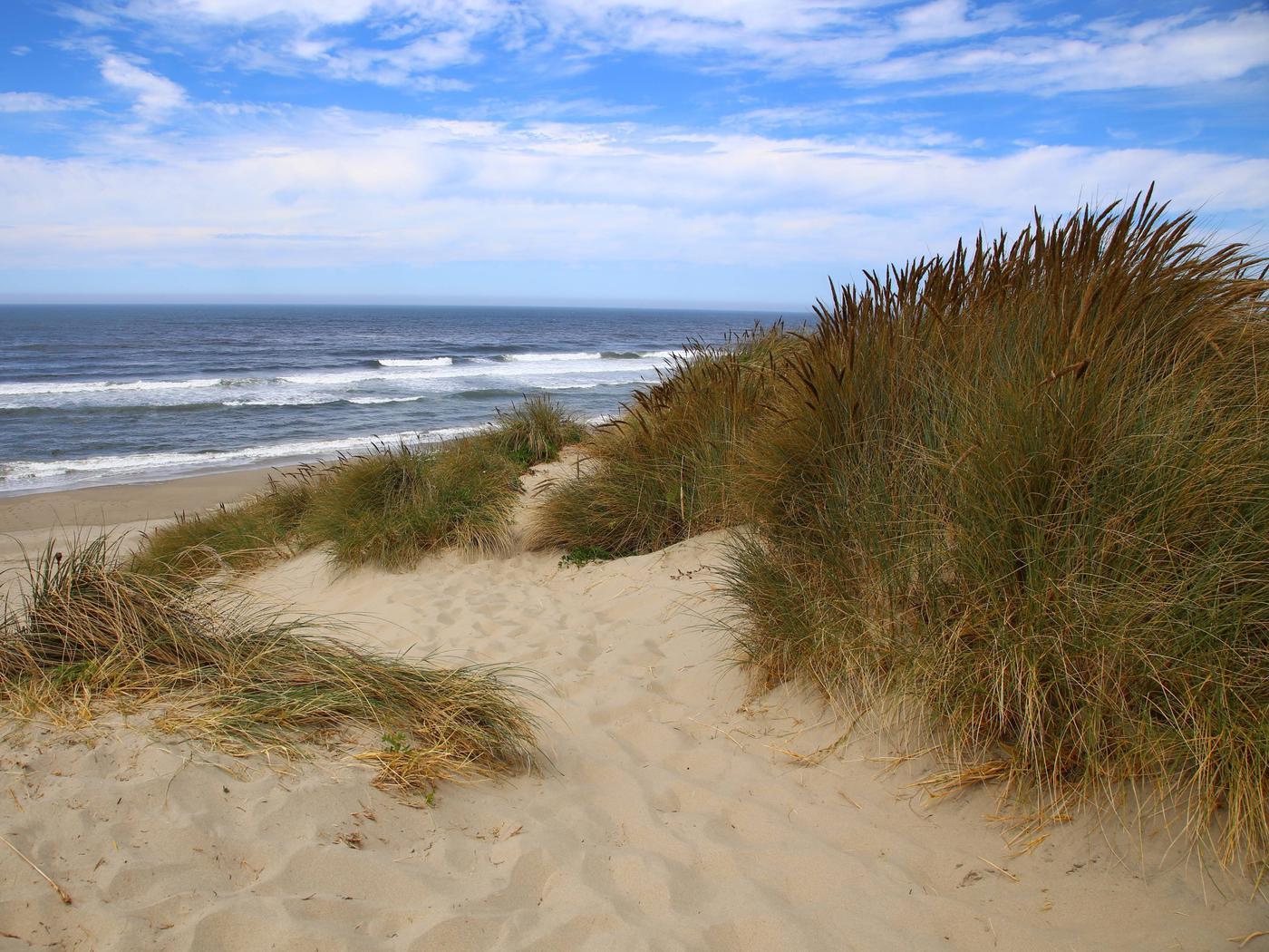 Oregon Dunes, Siuslaw National Forest