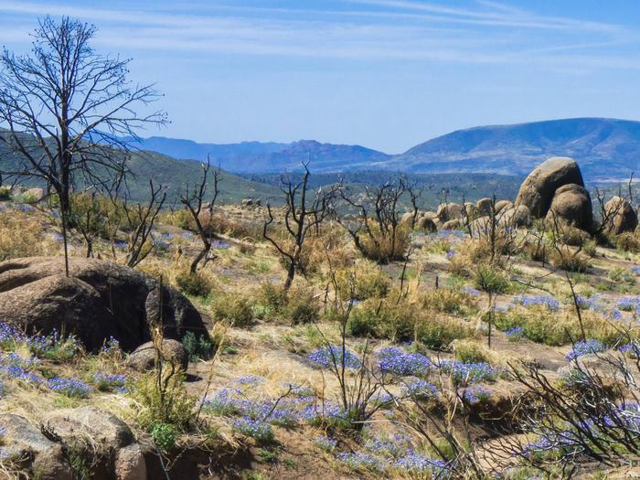 Preview photo of Prescott National Forest