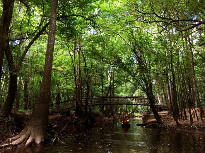 Preview photo of Congaree National Park