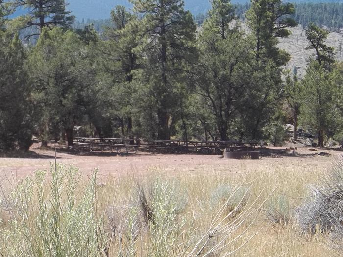 Picnic tables and a large fire pit with large trees in the background.Arch Dam Campground: Group Site 2