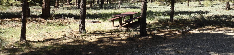 Campground Campsite 8