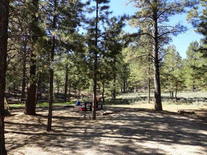 CampgroundCampsite 9