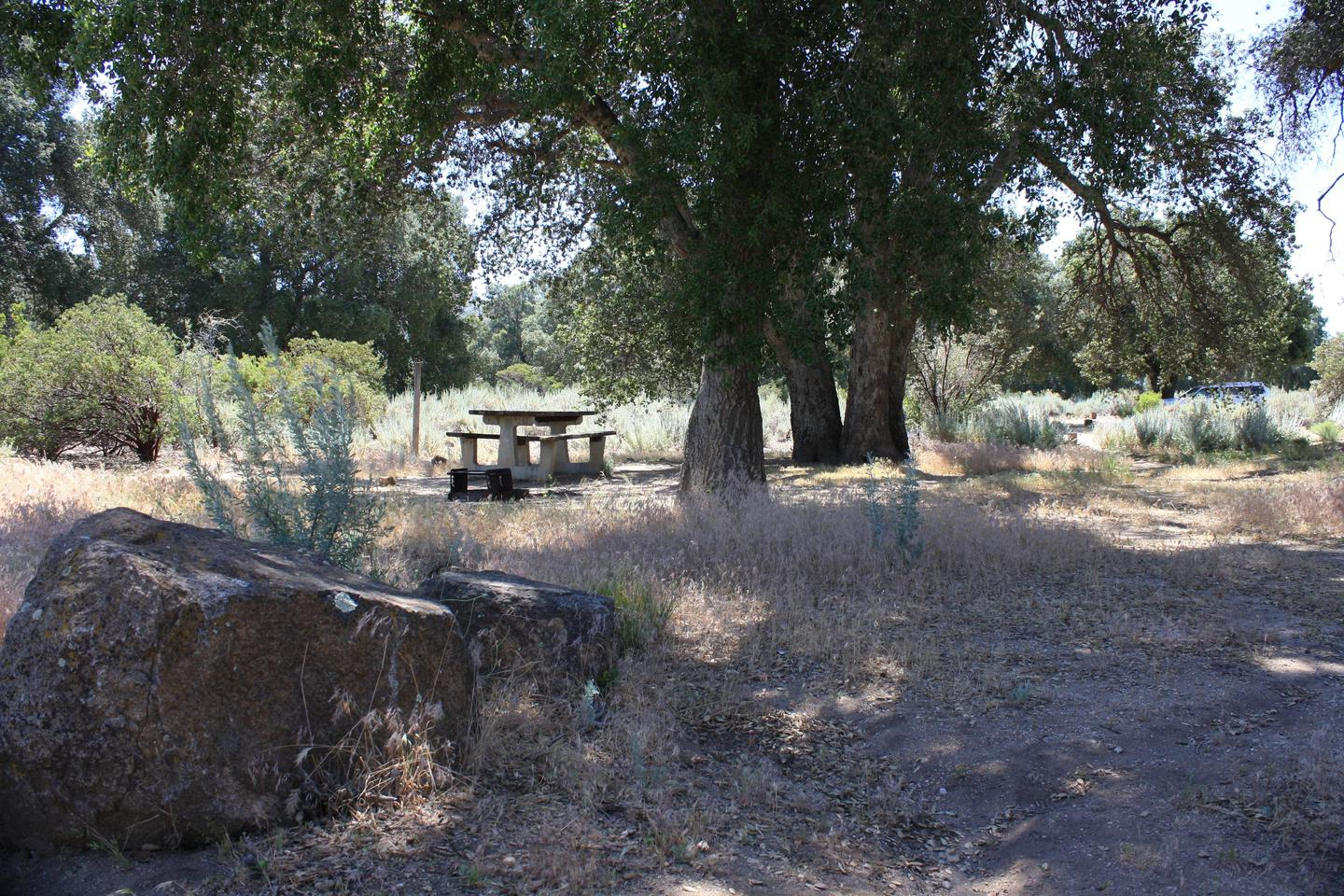 Shaded campsiteShaded campsite by old Oak trees