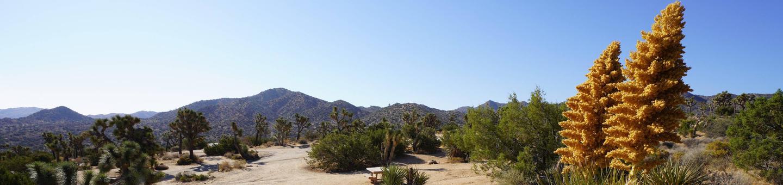 Black Rock CampgroundLush Joshua Trees and beautiful views of the Little San Bernardino Mountains