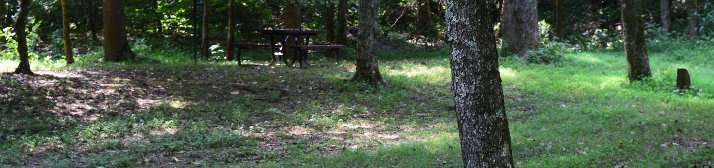 Markham Springs Site 35