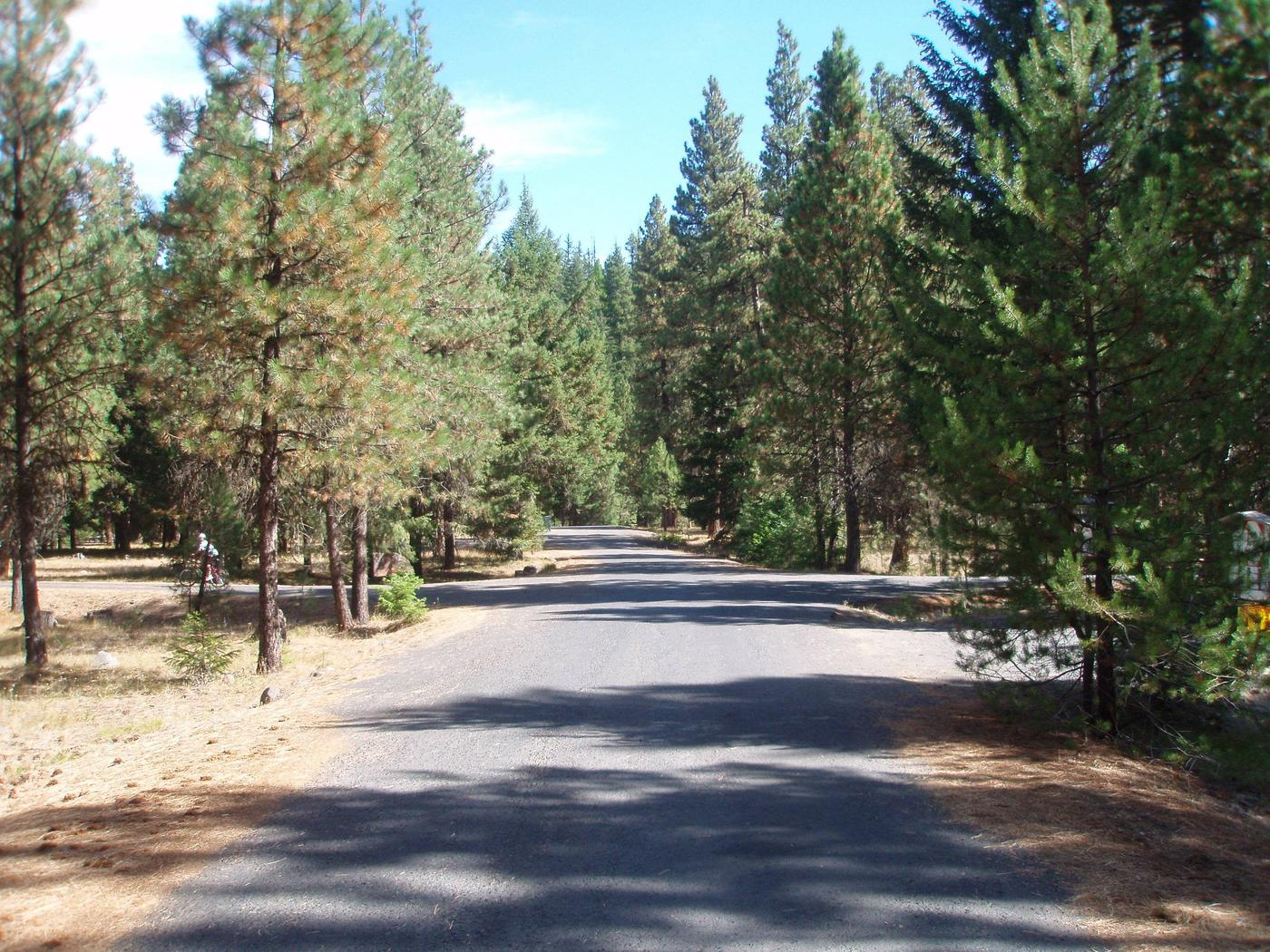 Flat paved road lined with pine and fir trees under partly cloudy sky.Kaner Flat Campground