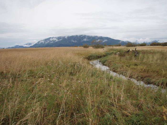 Sergief Slough cutting through the grassflats with mountains in the backgroundSergief Slough