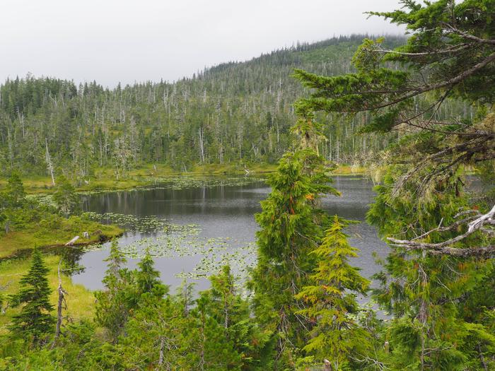 Lake surrounded by mountains and forestView from Middle Ridge Cabin