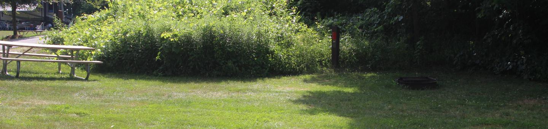 Winhall Brook N24N24