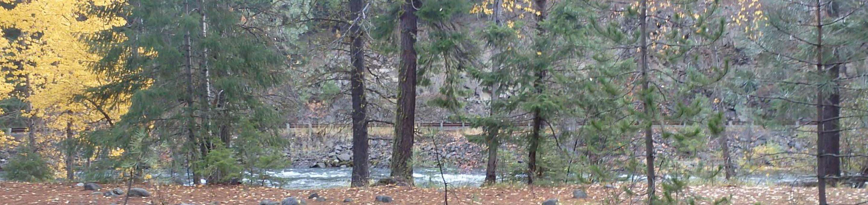 Looking at river through mixed conifer forest.Halfway Flat Campground