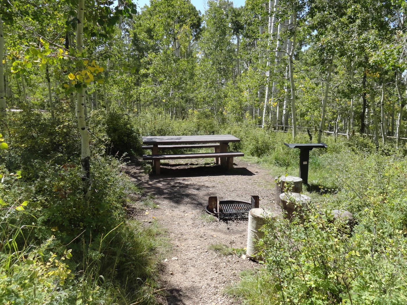 CampgroundCampsite 11