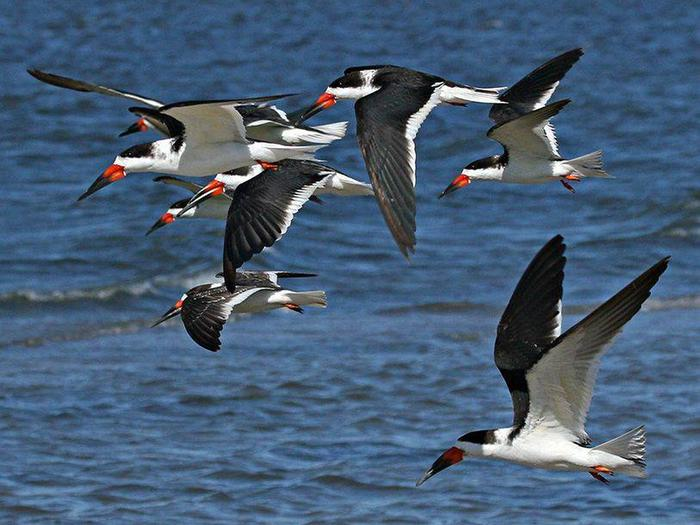 Preview photo of Merritt Island National Wildlife Refuge