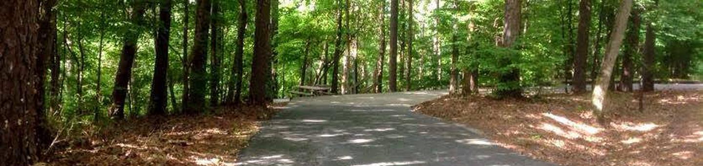 Deerlick Creek Campsite 25