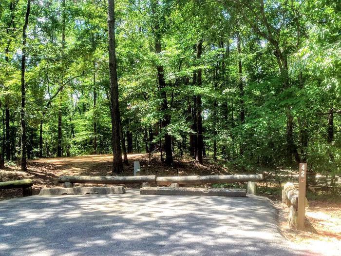 Deerlick Creek Campsite 42