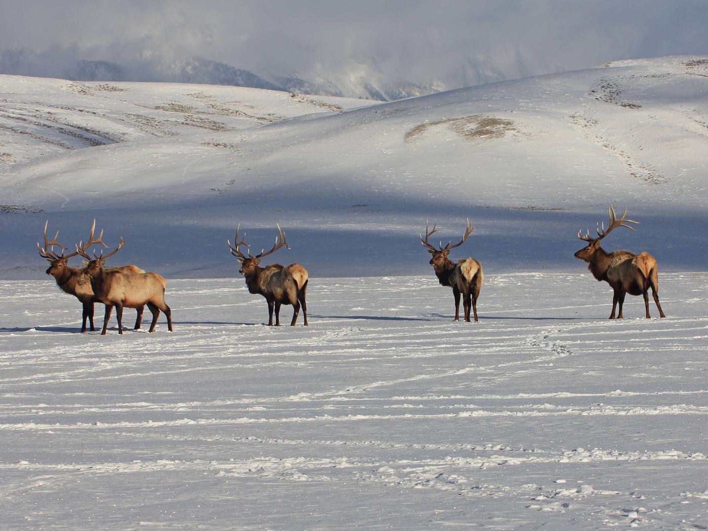 National Elk Refuge, Wyoming