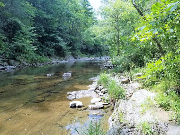 Potts Creek at Steel Bridge Campground